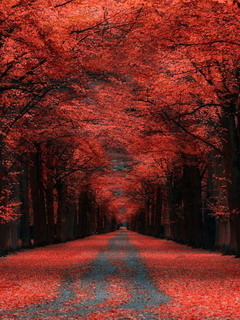 Autumn Lane Kassel Germany Mobile Wallpaper