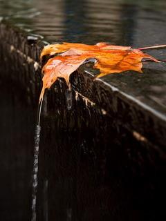 Leaves Falls Mobile Wallpaper