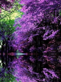 Purple Japanese Garden Mobile Wallpaper