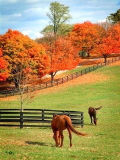 Louisville Kentucky Autumn Mobile Wallpaper