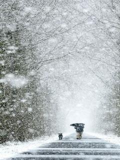 Winter Walk Mobile Wallpaper