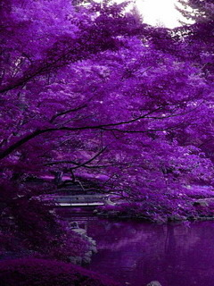 Purple River And Trees Mobile Wallpaper