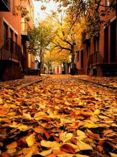 Autumn Philadelphia Pennsylvania Mobile Wallpaper