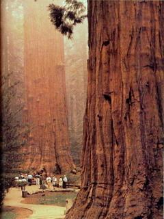 Californias Sequoia National Park Mobile Wallpaper