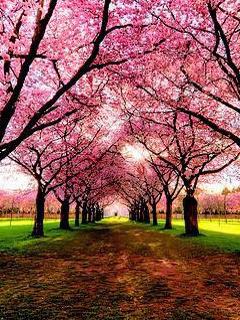 Pink Tree Way Mobile Wallpaper