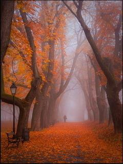 Morning Autumn Path Mobile Wallpaper