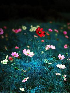 Fantasy Colors Flowers Mobile Wallpaper