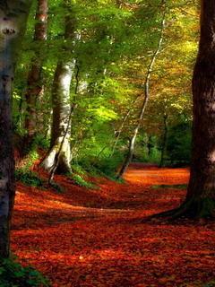 Red Falls Autumn  Mobile Wallpaper