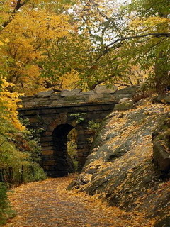 Autumn Arch Central Park NYC Mobile Wallpaper