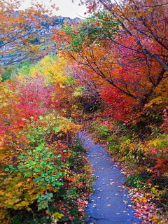 Colors Autumn Walk Mobile Wallpaper