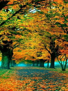 Falls Autumn Walk Mobile Wallpaper