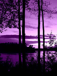 Violet Nature Mobile Wallpaper