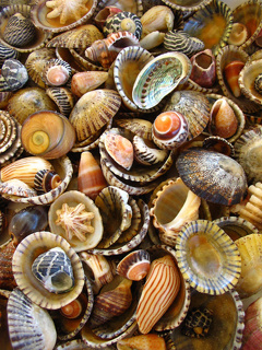 Sea Shells Mobile Wallpaper