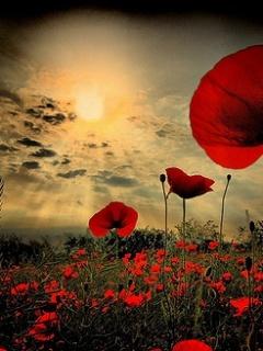 Red Flower Sunset Mobile Wallpaper