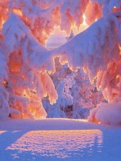 Winter Sunrise Mobile Wallpaper