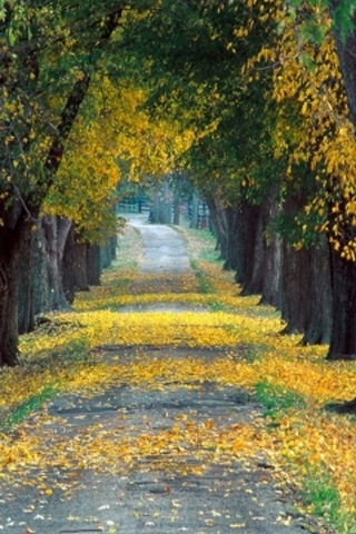 Yellow Autumn Leaves IPhone Wallpaper Mobile Wallpaper