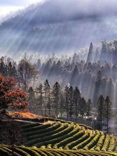 Field Wonderful Morning In Korea Mobile Wallpaper