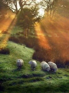 Sunset & Goats In Cumbria England Mobile Wallpaper