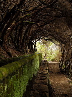 Tree Tunnel Maderia Portugal Mobile Wallpaper