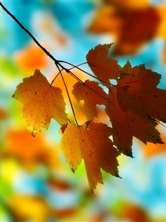 Autumn Orange Leafs Mobile Wallpaper