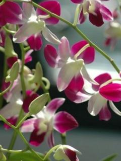 Purple & White Flowers Mobile Wallpaper