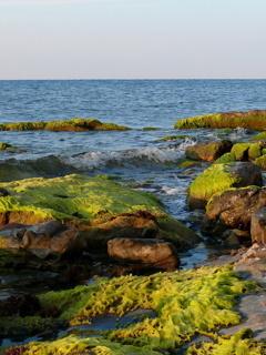 Sea Nature Mobile Wallpaper