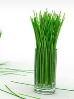 Green Grass In Bottle Mobile Wallpaper