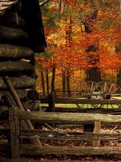 Autumns Splendor Mobile Wallpaper