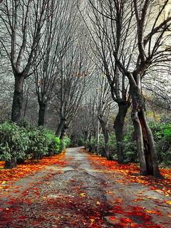 Autumn Road Fall Mobile Wallpaper