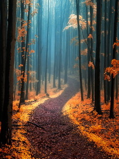Autumn Road Nature Forest Mobile Wallpaper