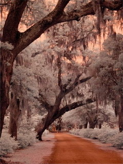Road Garden Savannah Georgia Mobile Wallpaper