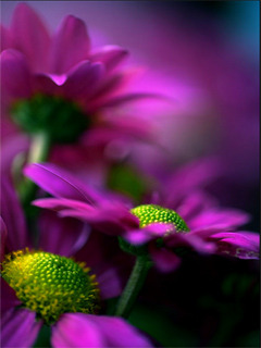 Purple Bright Flowers Mobile Wallpaper