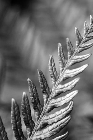 Leafs Grayscale Cute IPhone Wallpaper Mobile Wallpaper