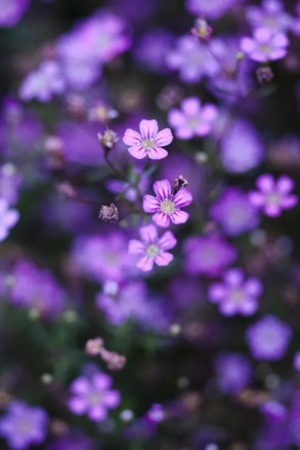 Purple Flowers On Garden IPhone Wallpaper Mobile Wallpaper