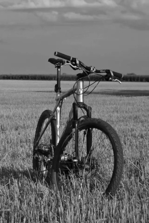 Gray Field On Bicycle IPhone Wallpaper Mobile Wallpaper