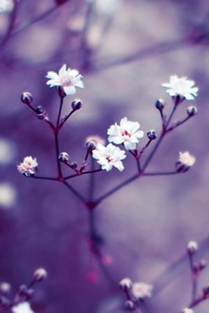 Download Purple Flowers Hd Iphone Wallpaper Mobile Wallpaper