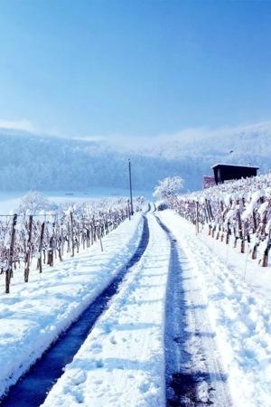 Morning Snow Road IPhone Wallpaper Mobile Wallpaper
