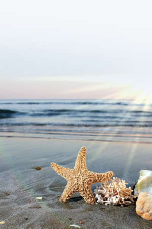 Starfish On Seaside Beach IPhone Wallpaper Mobile Wallpaper