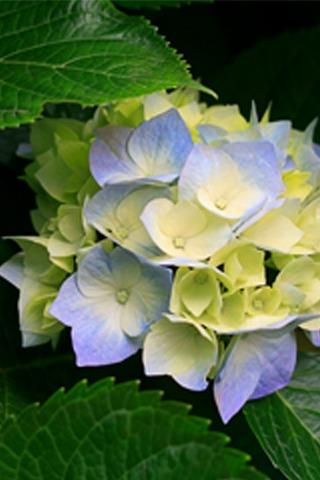 Beautiful Flowers IPhone Wallpaper Mobile Wallpaper