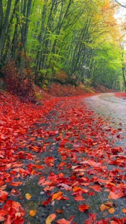 Rainy Autumn Forest Road IPhone Wallpaper Mobile Wallpaper