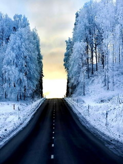 Winter Nature Road Mobile Wallpaper