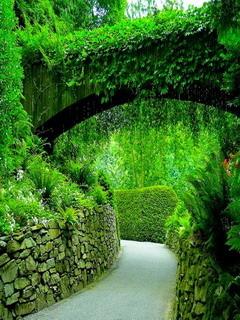 Green Cute Garden Mobile Wallpaper