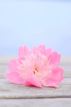 Pinky Cute Flower IPhone Wallpaper Mobile Wallpaper