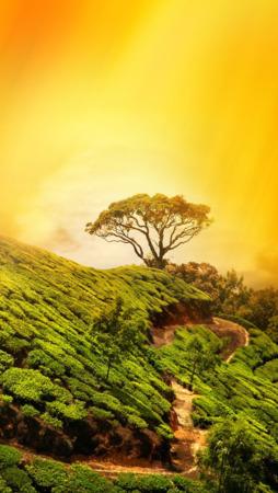 Tree On Green Mountain IPhone Wallpaper Mobile Wallpaper