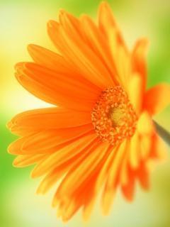 Flower 38 Mobile Wallpaper