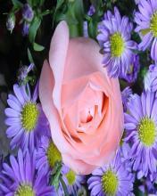 Flower 41 Mobile Wallpaper