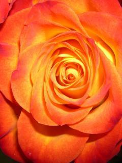 Flower 53 Mobile Wallpaper