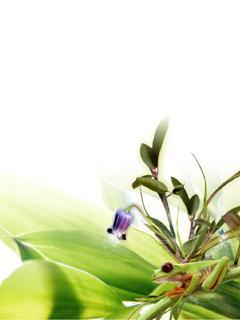 Flower 62 Mobile Wallpaper
