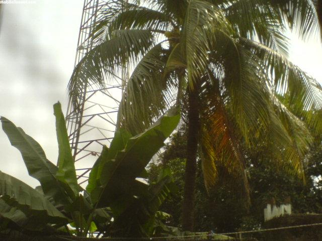 Palms Mobile Wallpaper
