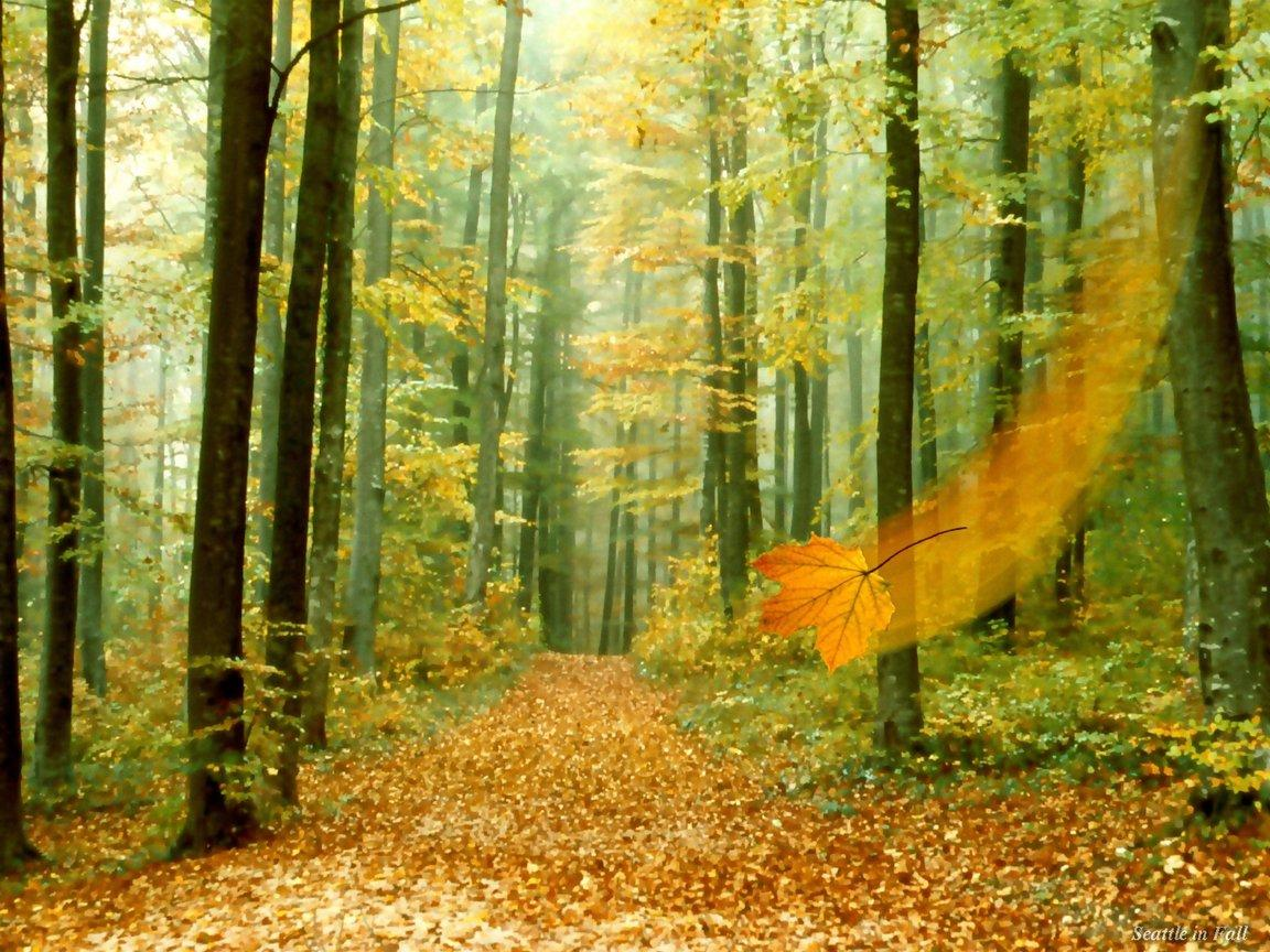 Download nature wall mobile wallpaper mobile toones for Wallpaper mobile home walls